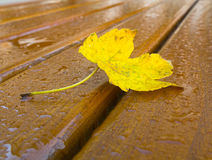 Autumn yellow leaf Stock Image