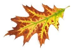Autumn yellow leaf Stock Photo