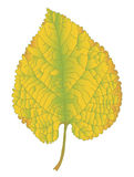 Autumn yellow leaf Royalty Free Stock Photos