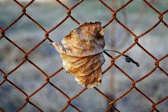 Autumn yellow leaf on the background of a grid Stock Images
