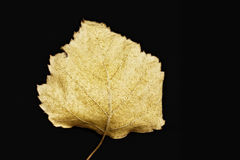 Autumn yellow leaf closeup Royalty Free Stock Photo