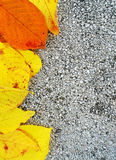 Autumn yellow leaf frame. Nature pattern on a concrete surface, seasonal concept royalty free stock photo