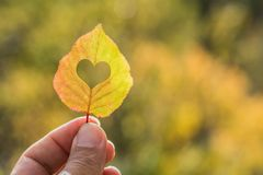Autumn yellow leaf in hand stock photography