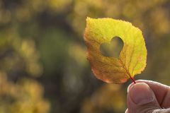 Autumn yellow leaf in hand royalty free stock image