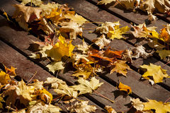 Autumn yellow leaf . Royalty Free Stock Photo