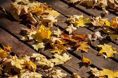 Autumn yellow leaf . Royalty Free Stock Photo