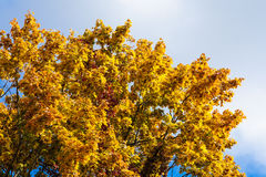 Autumn yellow leaf . Stock Images