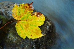 Autumn yellow leaf near water stream Royalty Free Stock Photo