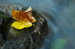 Autumn yellow leaf near water stream Stock Photos