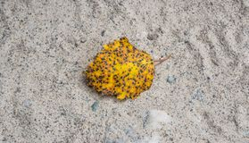 Autumn yellow leaf. On the sand beside the road Royalty Free Stock Photography
