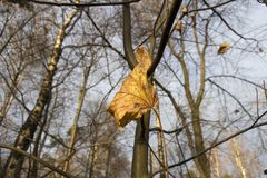 Leaf. Autumn yellow leaf on a tree branch Royalty Free Stock Photos