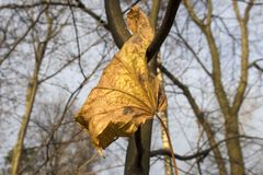 Leaf. Autumn yellow leaf on a tree branch Royalty Free Stock Photography