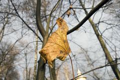 Leaf. An autumn yellow leaf on a tree branch Royalty Free Stock Images