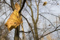 Leaf. Autumn yellow leaf on a tree branch Stock Photos
