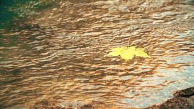 Autumn Yellow Leaf is Turned on Water stock footage