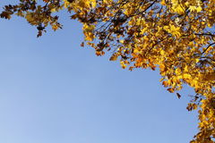 Autumn yellow leafs on blue sky stock photos