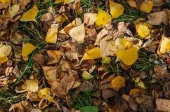 Autumn Yellow Leaves fotografie stock