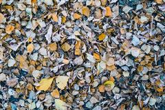 Autumn Yellow Leaves images stock