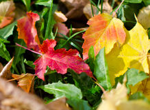 Autumn Yellow Leaves Lizenzfreie Stockbilder