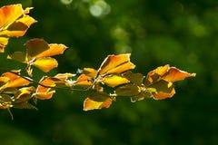 Autumn Yellow Leaves Fotos de archivo libres de regalías