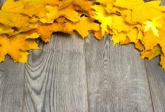 Autumn Yellow Leaves Royalty-vrije Stock Foto
