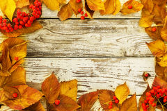 Autumn Yellow Leaves Immagine Stock