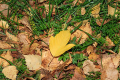 Autumn Yellow Leaves Imagen de archivo