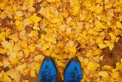 Autumn Yellow Leaves Foto de archivo