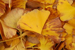 Autumn Yellow Leaves Fotografía de archivo