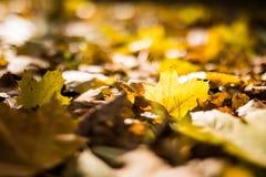 Autumn Yellow Leaves Imágenes de archivo libres de regalías
