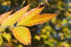 Autumn Yellow Leaves Imagen de archivo libre de regalías