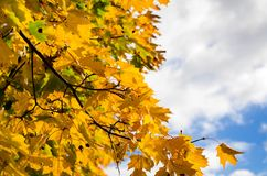 Autumn Yellow Leaves Fotos de Stock