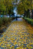 Autumn yellow leaves on the asphalt of city streets. Of italy Royalty Free Stock Images