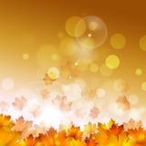 Autumn Yellow Leaves auf goldenem Hintergrund Stockbilder