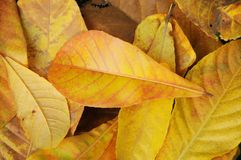 Autumn yellow leaves background Stock Photo