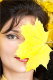 Autumn yellow leaves are on the background. Royalty Free Stock Photo