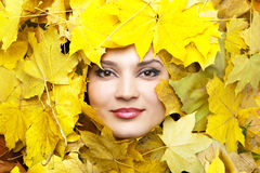 Autumn yellow leaves are on the background. Stock Image