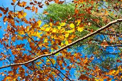 Autumn yellow leaves background Stock Photography