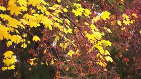 Autumn yellow leaves background stock video