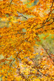 Autumn yellow leaves background Royalty Free Stock Photos
