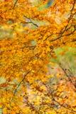Autumn yellow leaves background Royalty Free Stock Photos