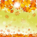 Autumn Yellow Leaves Bright Background Image libre de droits