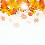 Autumn Yellow Leaves en el fondo blanco Imágenes de archivo libres de regalías