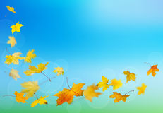 Autumn yellow leaves falling Royalty Free Stock Image