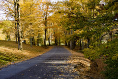 Autumn yellow leaves on a gravel road Royalty Free Stock Image