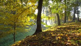 Autumn Yellow Leaves i en parkerarörelsebakgrund stock video