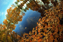 Autumn. Yellow leaves in the lake. Stock Images