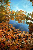Autumn. Yellow leaves in the lake. Stock Image
