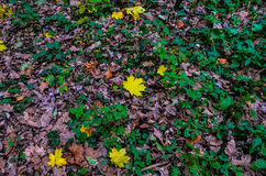 Autumn. Yellow leaves lie on the green grass Royalty Free Stock Image