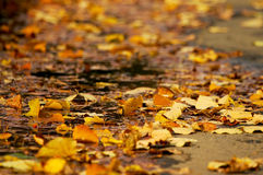 Autumn. Yellow leaves. Autumn. Yellow leaves . It lies on the road Royalty Free Stock Photography